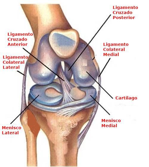 Esguince de Rodilla Grado 1 en el fútbol, ¿Qué es un Esguince de Rodilla?, ¿Cómo se produce el Esguince de Rodilla Grado 1?, Estructura anatómica de la rodilla, causas del esguince de rodilla grado 1 en el fútbol, ¿Cuáles son los grados del esguince de rodilla?, ¿Cuáles son los síntomas del esguince de rodilla grado 1 en el fútbol?, ¿Cómo se hace el diagnóstico del esguince de rodilla grado 1 en el fútbol?, Tratamientodel esguince de rodilla grado 1 en el fútbol, Factores de riesgodel esguince de rodilla grado 1 en el fútbol,